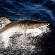 So sieht das Hai-Opfer jetzt aus! (Foto)
