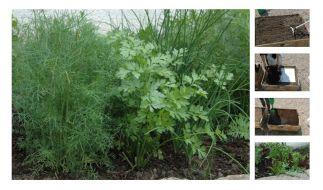 Mit einer Pflanzmatte gelingt das Gemüse auch ohne grünen Daumen. (Foto)
