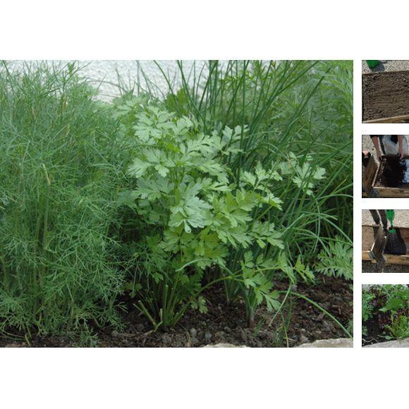 Kräuter anpflanzen ganz ohne grünen Daumen (Foto)