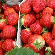 Erdbeerkonfitüre mit Essig und Rote-Bete-Saft aufpeppen (Foto)