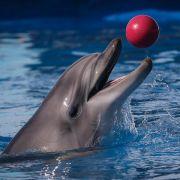 Forscherin führt Beziehung mit Delfin - Sex inklusive (Foto)