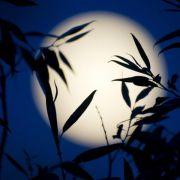 Gärtnern mit dem Mondkalender: Esoterik oder nützlich? (Foto)