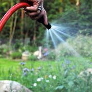 Wasser sparen in der Hitze: Rasen nach den Beeten gießen (Foto)