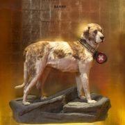Retter ohne Schnapsfass: Schweiz ehrt Nationalhund Barry (Foto)