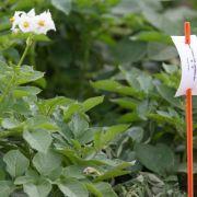 EU will mehr Spielraum bei Anbauverboten für Genpflanzen (Foto)