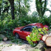 Bäume im Garten nach Unwettern auf Schäden prüfen (Foto)