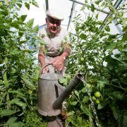 Fünf Tipps für prächtige Tomaten aus dem Garten (Foto)