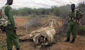 Wilderer töten 20 000 Elefanten auf der Jagd nach Elfenbein (Foto)