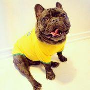 Der Hammer: Diese Bulldogge ist ein echtes Supermodel! (Foto)