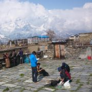 Erst bekommen sie Kekse, dann reißen sie Himalaya-Wildtiere (Foto)