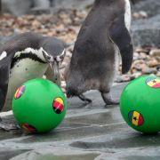 Pinguine orakeln zweiten Sieg für Deutschland (Foto)