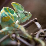 Viele Halter wissen zu wenig über exotische Tiere (Foto)