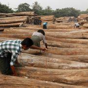 Massenweise illegal geschlagenes Holz in Myanmar beschlagnahmt (Foto)