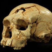 Zuerst kam das Gesicht: Neandertaler entwickelte sich stufenweise (Foto)