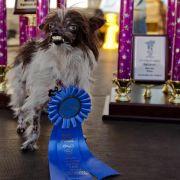 Peanut ist der «hässlichste Hund der Welt» (Foto)