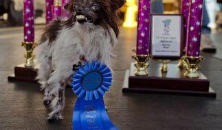 Hässlichkeit ist kein Grund, sich zu verstecken. Auch für Hunde nicht. Peanut, ein Vierbeiner aus North Carolina, gewann den Titel «Hässlichster Hund der Welt». (Foto)