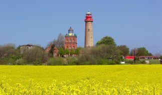 Wenn im Frühling die Rapsfelder blühen, ist Rügens Wahrzeichen, der Leuchtturm von Kap Arkona, weithin sichtbar. (Foto)