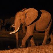 Keine Frage der Größe: Viele Säugetiere pinkeln gleich lang (Foto)