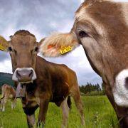 21 Sekunden dauert eine tierische Pinkel-Pause (Foto)