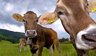 Die Pinkeldauer ist bei Säugetieren, die schwerer als drei Kilogramm sind, gleich glang. (Foto)