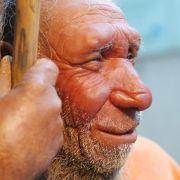 Kotreste zeigen: Neandertaler aßen mehr Grünzeug als gedacht (Foto)