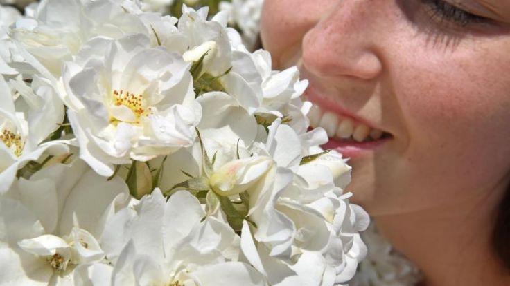 Lehmiger Boden intensiviert Geruch der Duftrosen (Foto)