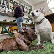 Zum Kopierer und dann Gassi: «Kollege Hund» im Büro (Foto)