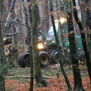 Erbschaftsteuer-Urteil: Waldbesitzer warnen vor «Heuschrecken» (Foto)