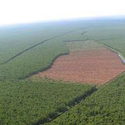 Waldschwund in Indonesien größer als in Brasilien (Foto)