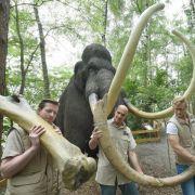 Überreste vom Mammut: Dino-Park lässt Eiszeit aufleben (Foto)