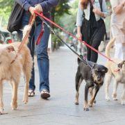 Kurz oder ellenlang: Welche Leine sich für den Hund eignet (Foto)