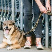 Wir müssen draußen bleiben: Mit dem Hund in der Stadt unterwegs (Foto)