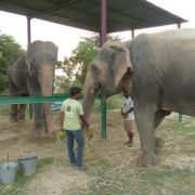 So süß! Elefant Raju hat jetzt eine Freundin (Foto)