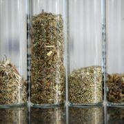 Kräuter-Joints: Gefährlich, aber legal (Foto)