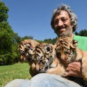 Tiger statt Wellensittich - Exoten als Haustiere (Foto)