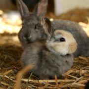 Kaninchen können sich im Fressnapf verheddern (Foto)