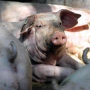 Kommt mehr Tierwohl aus der Marktnische heraus? (Foto)