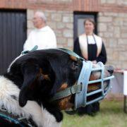 Gottes Segen für Bello - Tiergottesdienste liegen im Trend (Foto)