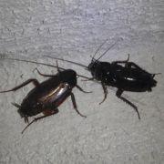 Mieter haftet nicht für Schädlingsbefall in Wohnung (Foto)