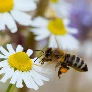 Arbeiter-Bienen schlafen nach Berufsgruppen getrennt (Foto)