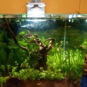 So bleibt das Aquarium algenfrei (Foto)