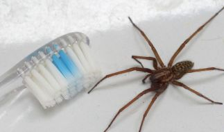 Aus Ekel vor einer Spinne setzte ein Mann in Seatle, USA, sein komplettes Haus in Brand. (Foto)