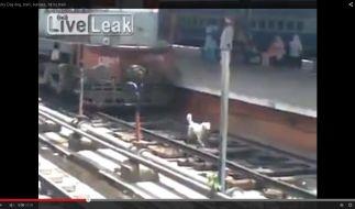 Dieser Hund streunt auf den Bahngleisen umher - von hintern rast ein Zug heran. (Foto)