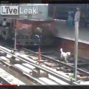 Hund wird von Zug überrollt - und überlebt