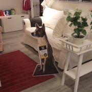 Beim Shoppen einen Hund adoptieren: Ikea macht's möglich.