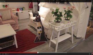 Beim Shoppen einen Hund adoptieren: Ikea macht's möglich. (Foto)