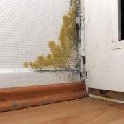 Mietminderung bei Schimmel: Schrank darf an Außenwand stehen (Foto)