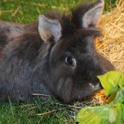 Abtasten entlarvt übergewichtige Kaninchen (Foto)