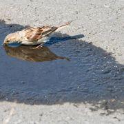 Vögel auf Wassersuche - schon simple Tränken können helfen (Foto)