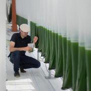 Algen im Tank: Forscher arbeiten am Kerosin der Zukunft (Foto)